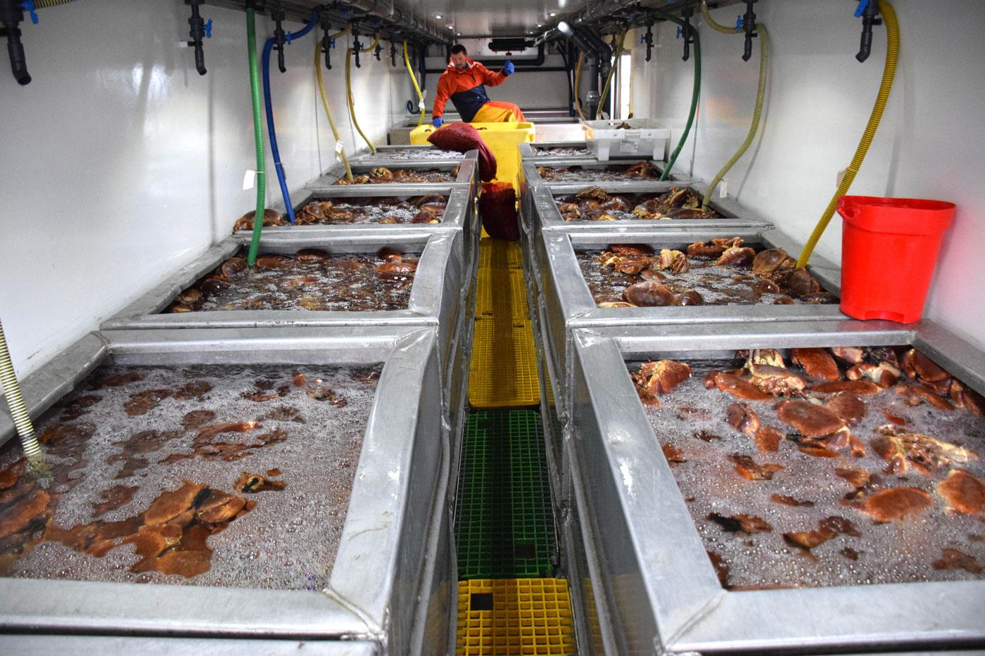 MacNeil Shellfish - Wild, creel caught and sustainable Scottish